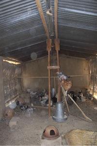 kippenfokkerij
